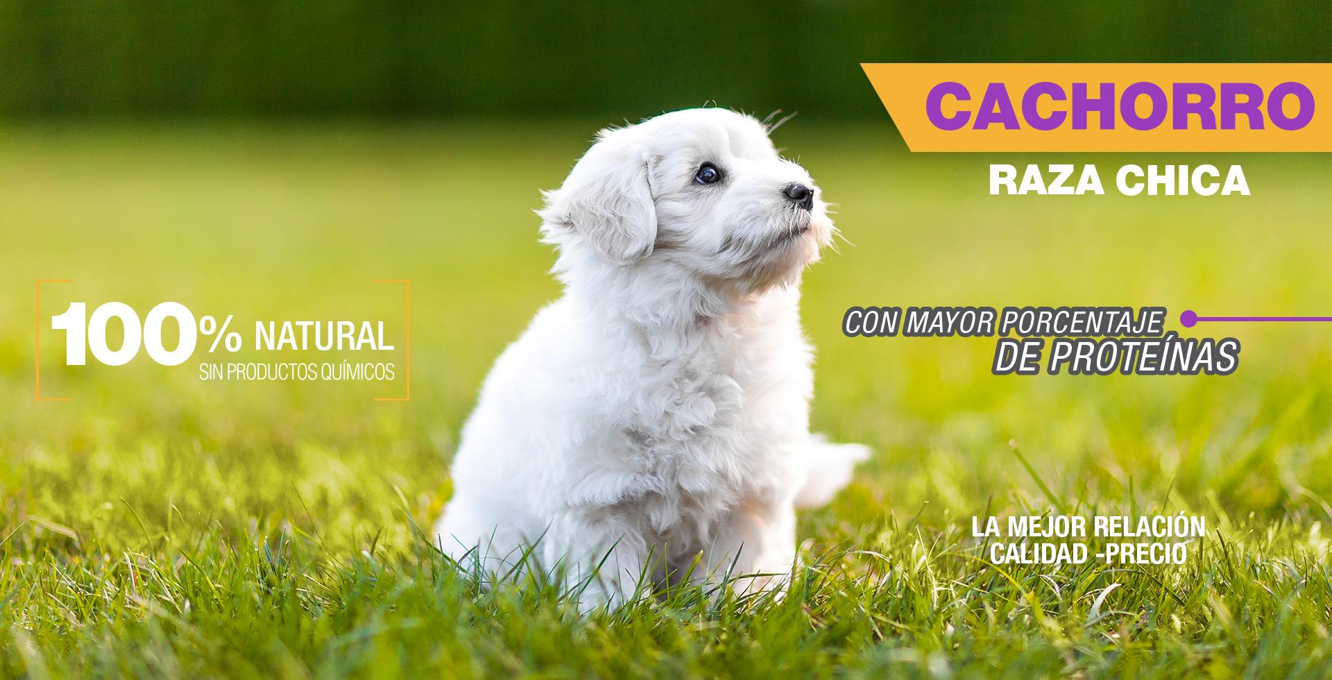 cachorro-chica-header-perfect-sense