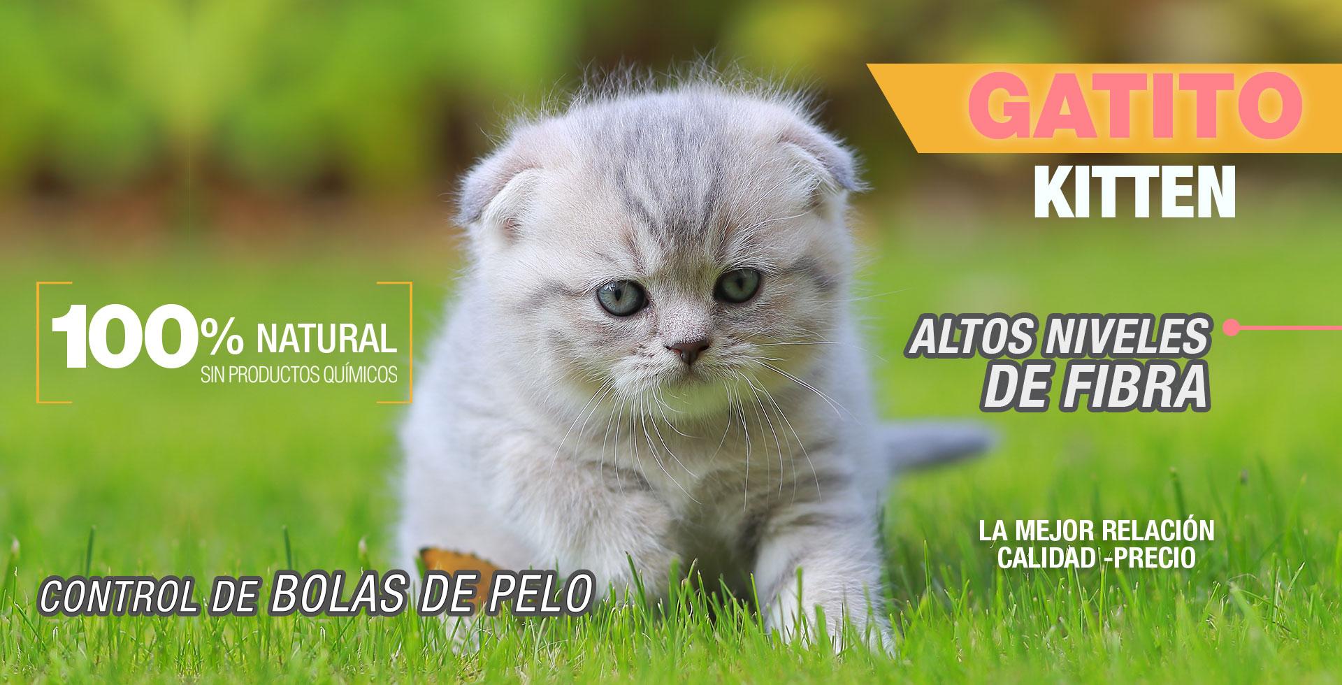 gatito-header-perfect-sense
