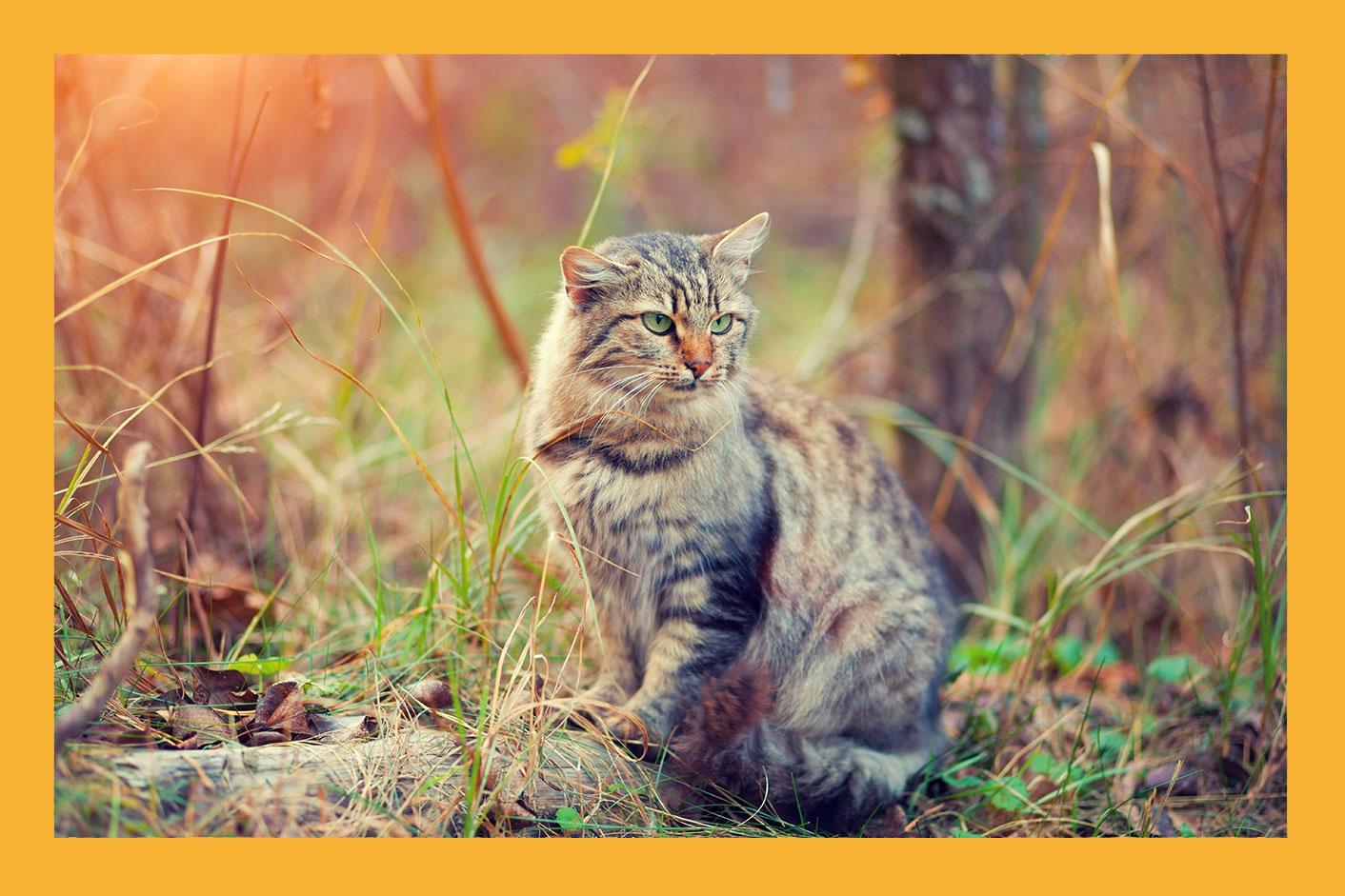 perfect-sense-beneficios-gato